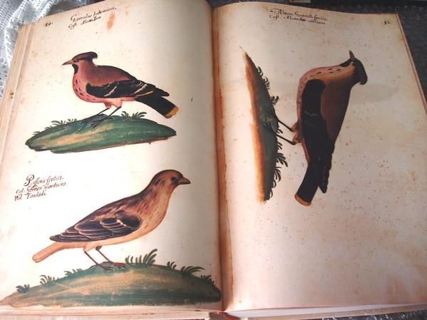 Atlas de Historia Natural de Felipe II, o Códice Pomar, s. XVI