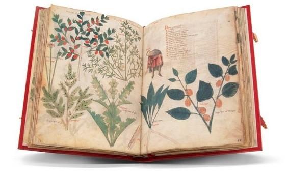 Dioscórides Latino, s. XII