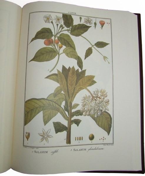 Flora Peruviana et Chilensis, ed. holandesa, 1798-1802