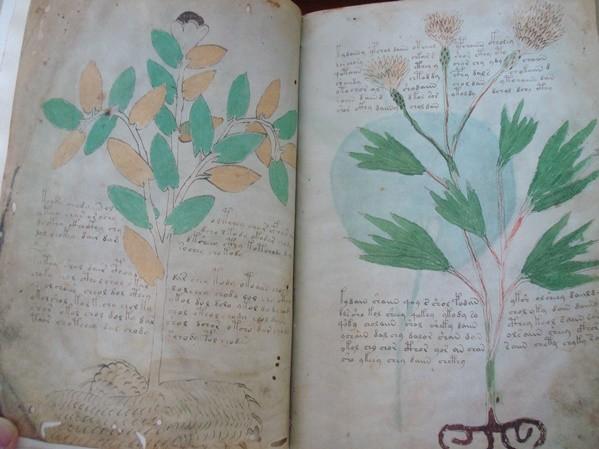 Manuscrito Voynich, s. XV (5*+)