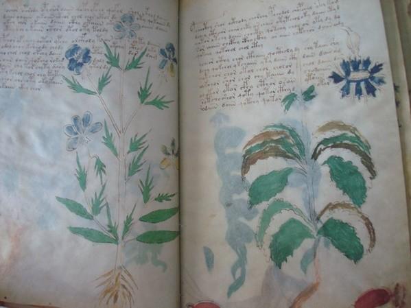 Voynich manuscript, s. XV (5*+)