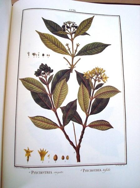 Flora Peruviana et Chilensis, ed. lujo, 1798-1802