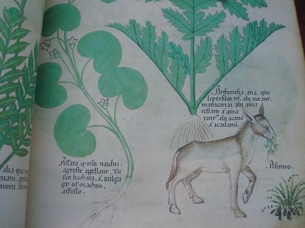 Tractatus de Herbis (Tratado de plantas medicinales), c. 1440
